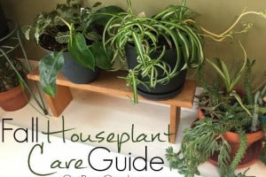 Fall Houseplant Care Guide