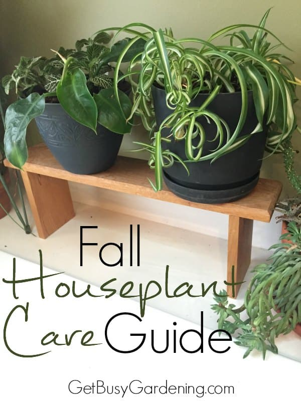 It's common for houseplants to suffer in the fall as the days get shorter and the temperatures turn colder. Here are some ways you can ease the shock for your houseplants. Fall Houseplant Care Guide