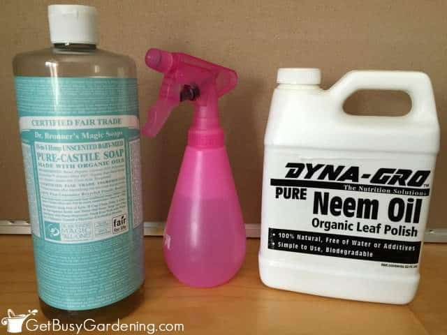 Neem Oil And Soap To Kill Spider Mites