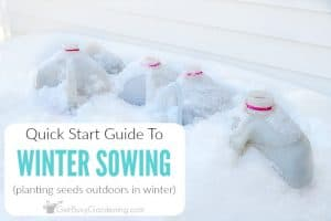 Winter Sowing Guide: How To Sow Seeds Outdoors In Winter
