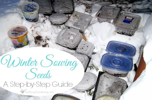 Winter sowing seeds - a step-by-step guide
