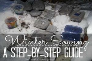 Winter Sowing - A Step By Step Guide