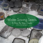 Winter Sowing Seeds