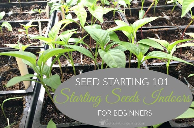 Seed Starting 101: Tips For Starting Seeds Indoors For Beginners