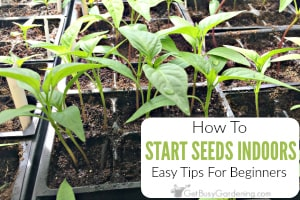 Tips For Growing Seeds Indoors For Beginners