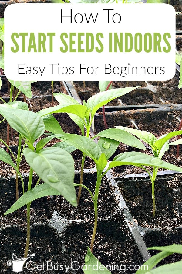 Growing seeds indoors is a great way to save money and get a jump-start on your gardening season. Follow these easy tips for starting seeds indoors for beginners to learn how to grow plants from seeds step-by-step, including when to start seeds indoors, soil, lighting, watering and fertilizing seedlings.
