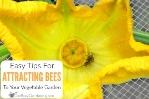 How To Attract Bees To Your Vegetable Garden
