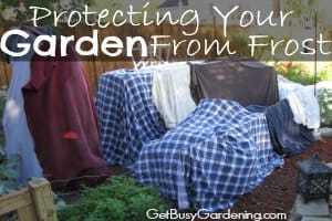 Protecting Your Garden from Frost