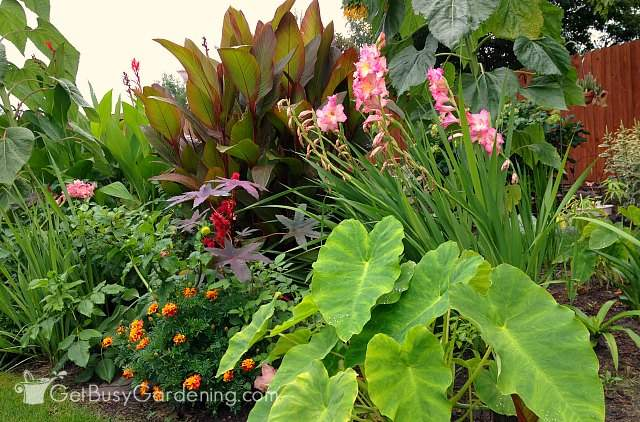 Many tropical garden plants can be overwintered indoors