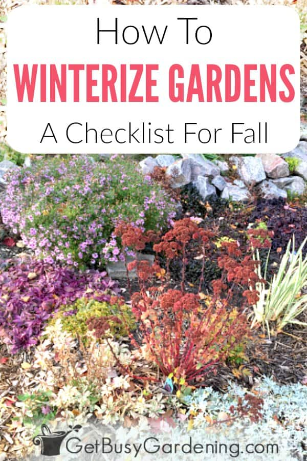 Learn everything you need to know about winterizing gardens in the fall. Includes a list of things you can do to prep garden beds before the snow flies. Plus, lots of ideas and detailed steps to winterize flowers and vegetables, indoor and outdoor plants in pots and containers, as well as tips for getting your yard and garden furniture ready for winter too.