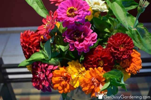 Cut flowers can carry indoor plant insects