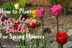 How To Plant Garden Bulbs For Spring Flowers