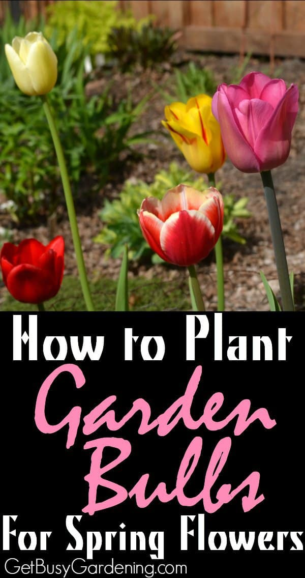 Add more color to your spring garden by planting garden bulbs in the fall. Learn how to plant garden bulbs for spring flowers.