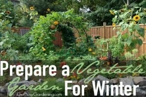 Prepare a Vegetable Garden for Winter