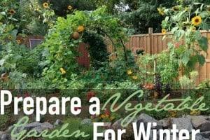 Prepare a Vegetable Garden for Winter