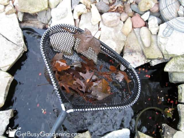 Remove Leaves From Garden Pond