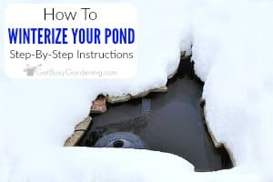 How to winterize a pond