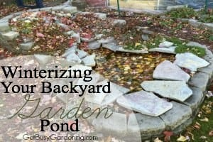 Winterizing Your Backyard Garden Pond