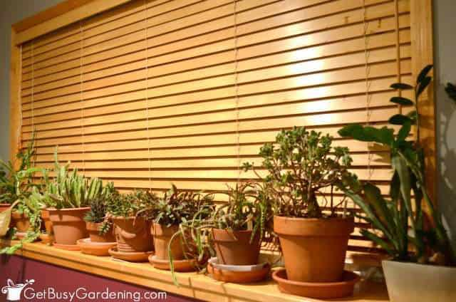 Close Blinds To Protect Houseplants From Drafts
