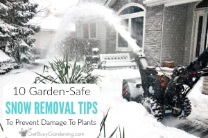 10 Garden-Safe Snow Removal Tips To Prevent Salt Damage To Plants
