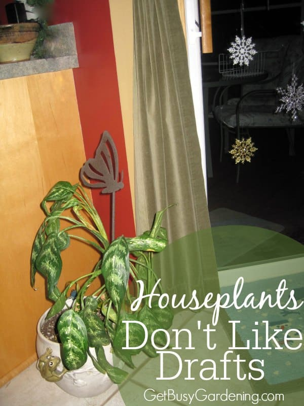 Houseplants don't like drafts, and they are especially sensitive to extreme cold or hot drafts. Keep your houseplants away from heat sources or cold drafts.