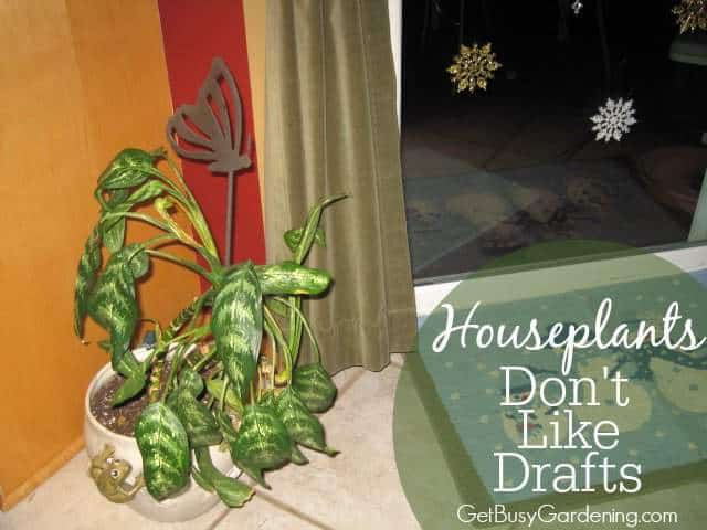 Houseplants Don't Like Drafts