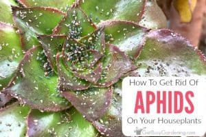 how to get rid of insects on houseplants