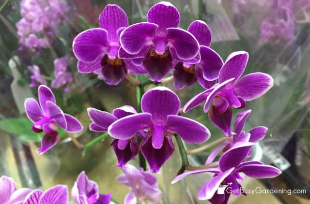 Orchids are winter blooming plants