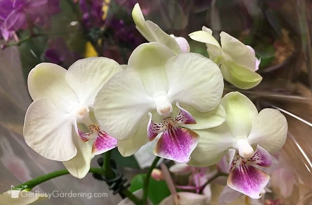 Plant care orchids houseplant