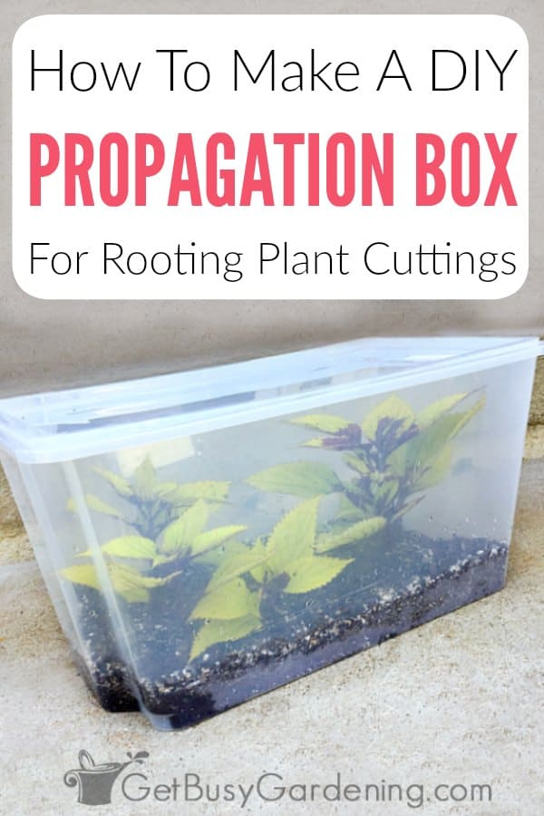 Follow these simple step-by-step instructions and learn how to make your own DIY propagation box (aka propagation chamber) for rooting plants from stem cuttings. You'll also get tips for how to use it for propagating your favorite garden plants or houseplants, and I'll even show you how to create your own propagation station. This project is inexpensive and easy to make with only a few supplies you may already have.