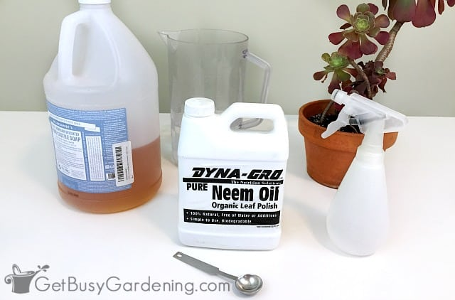 Use neem oil for aphids on houseplants