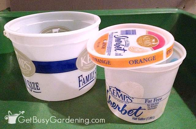 Large ice cream buckets are great for winter sowing