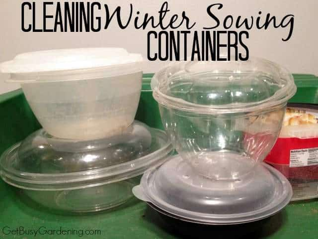 Cleaning Winter Sowing Containers
