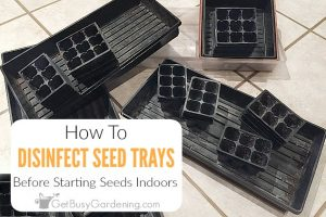 How To Disinfect Seed Trays And Flats Before Starting Seeds Indoors