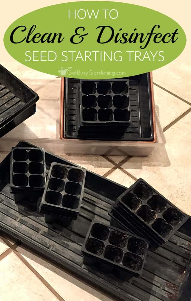 protect your seedlings from damping off seedling blight by first cleaning and seed