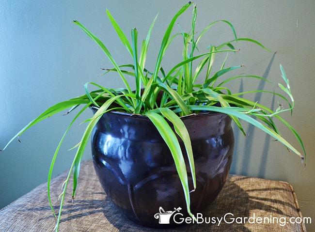 Hide Ugly Pot With Decorative Pot