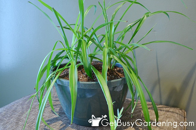 Repotted Houseplant