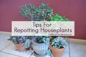 Tips For Repotting Houseplants