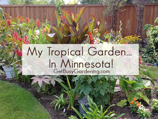 My Tropical Garden – in Minnesota!