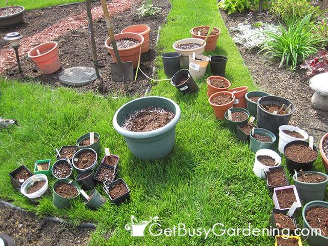 Tropical Bulbs Potted Up