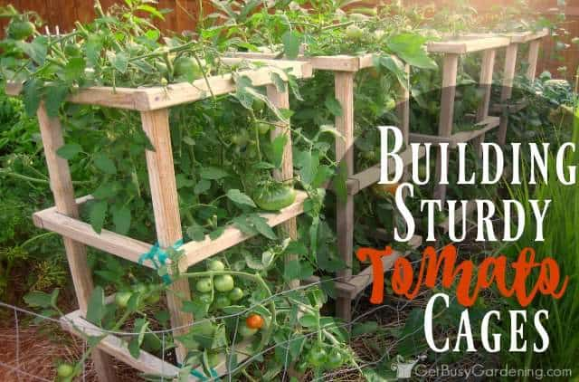 Building Sturdy Tomato Cages