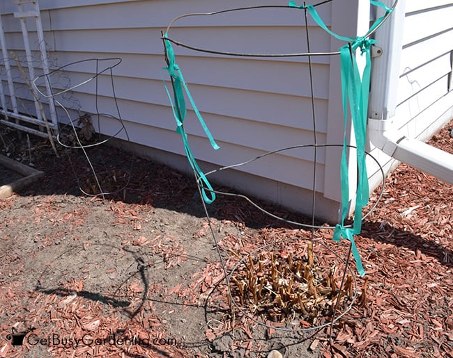 how to make tomato cages from wire