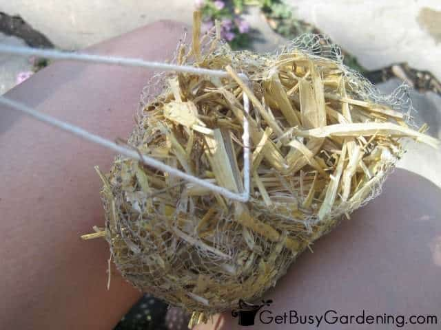 Making Barley Straw Bundle For Pond