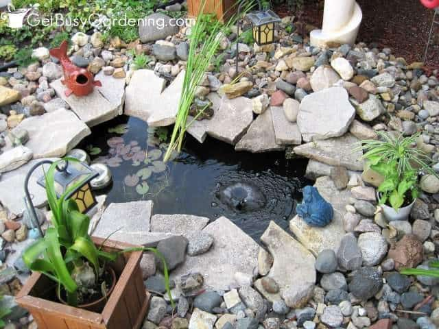 Pond Water Is Naturally Clear