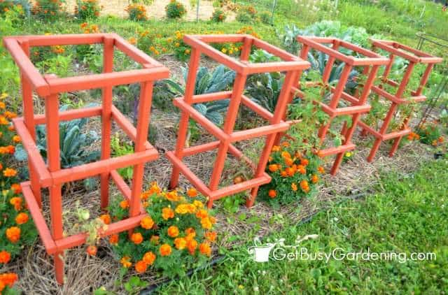 Sturdy Tomato Cages Stained Orange