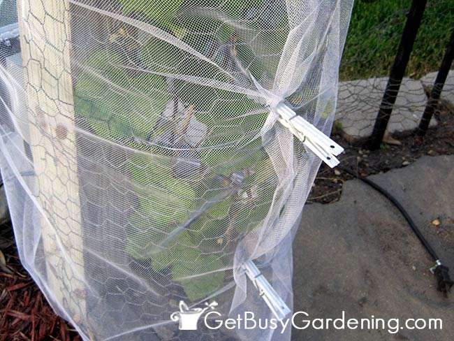 Secure Tulle Around Grapevine With Clothes Pins