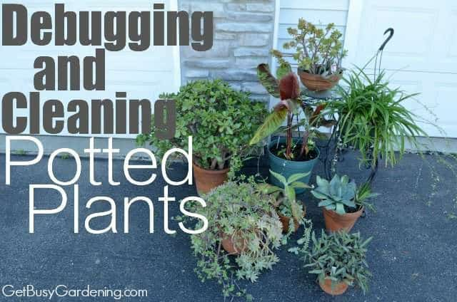 Debugging And Cleaning Potted Plants