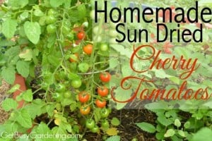 How To Make Homemade Sun Dried Cherry Tomatoes