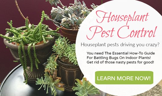 houseplant-pest-control-ebook-banner