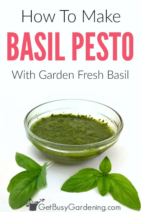 Learn how to make the best homemade basil pesto without pine nuts or cheese. This dairy free pesto recipe is delicious and easy to freeze. It's simple to make in a food processor and has only four ingredients: fresh basil from your garden or the store, lemon, garlic and olive oil.
